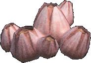 Animal Crossing New Horizons Acorn Barnacle Image