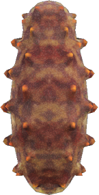 Animal Crossing New Horizons Sea Cucumber Image