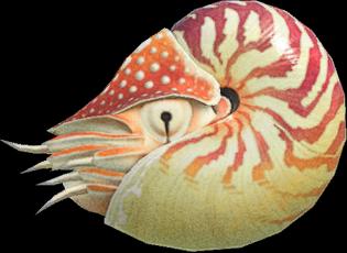 Animal Crossing New Horizons Chambered Nautilus Image