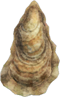 Animal Crossing New Horizons Oyster Image