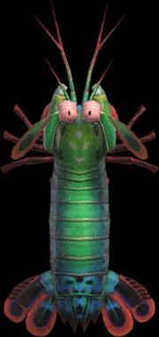 Animal Crossing New Horizons Mantis Shrimp Image
