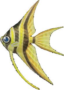 Animal Crossing New Horizons Angelfish Image