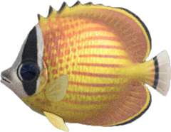 Animal Crossing New Horizons Butterfly Fish Image