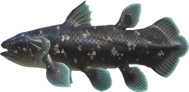 Animal Crossing New Horizons Coelacanth Image