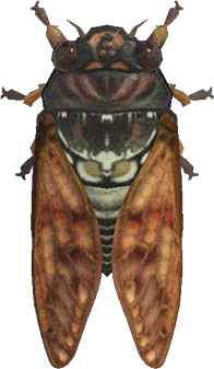 Animal Crossing New Horizons Brown Cicada Image