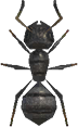 Animal Crossing New Horizons Ant Image
