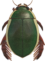 Animal Crossing New Horizons Diving Beetle Image