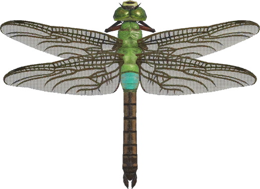 Animal Crossing New Horizons Darner Dragonfly Image