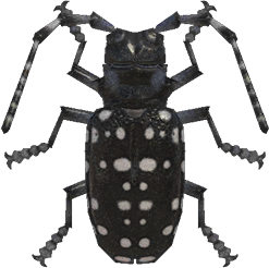Animal Crossing New Horizons Citrus Long-horned Beetle Image