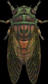 Animal Crossing New Horizons Evening Cicada Image
