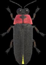 Animal Crossing New Horizons Firefly Image