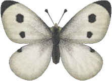 Animal Crossing New Horizons Common Butterfly Image