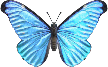 Animal Crossing New Horizons Emperor Butterfly Image