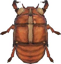 Animal Crossing New Horizons Cicada Shell Image