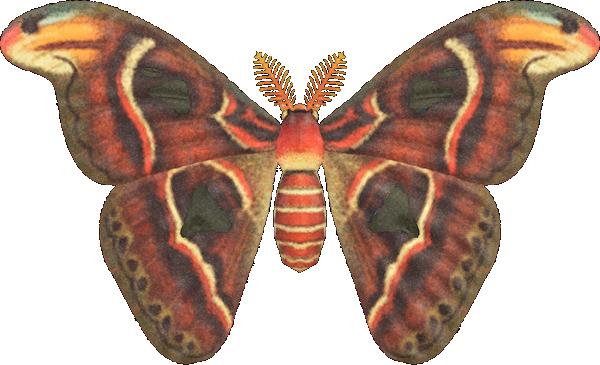 Animal Crossing New Horizons Atlas Moth Image