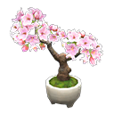 Main image of Cherry-blossom bonsai