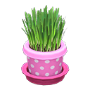 Image of Cat grass