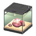 Main image of Acorn barnacle