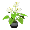 Image of Anthurium plant