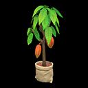 Main image of Cacao tree
