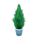 Main image of Cypress plant