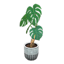Image of Monstera