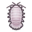 Image of Giant isopod
