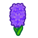 ヒヤシンス あつ の 森 紫