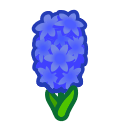 Image of Blue hyacinths