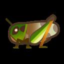 migratory locust