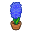 Image of Blue-hyacinth plant