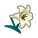 Image of White lilies